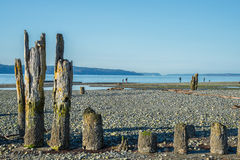 Old Pilings on Stony Beach. Old barnacle encrusted pilings from a long-gone pier on a desolate stony beach at low tide. Copy space royalty free stock photo