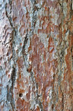 Old pine bark Royalty Free Stock Photos