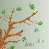 Old pine branch vector Royalty Free Stock Images