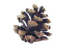 Old pine cone Royalty Free Stock Image