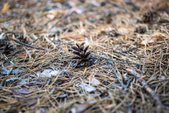 Old pine cone. On the ground Royalty Free Stock Image