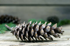 Old pine cone Stock Photography