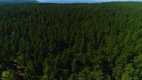 Old pine forest cover plain valley against river aerial view