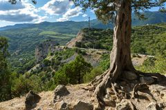 Old pine on top of the mountain of Crimean peninsula Royalty Free Stock Photos