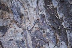 Old pine tree bark closeup texture photo. Rustic tree trunk closeup. Royalty Free Stock Photos