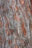 Old pine tree bark Stock Images