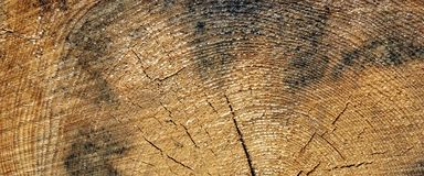Old Pine Wood Tree Trunk Ring Fiber Texture Closeup Stock Photography