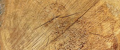 Old Pine Wood Tree Trunk Ring Fiber Texture Closeup Stock Photography