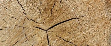 Old Pine Wood Tree Trunk Ring Fiber Texture Closeup Royalty Free Stock Image