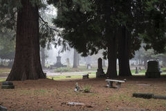 Old Pioneer Cemetery in fog Royalty Free Stock Images