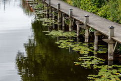 Old plank pier with green water lily leaves floating on the wate. R Stock Images
