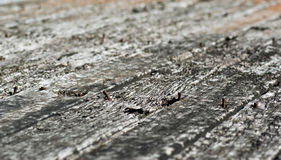 Old planks worn wood texture Royalty Free Stock Images