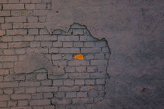 The old plaster on gray brick wall Stock Image