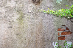 Old plaster walls background Royalty Free Stock Photos