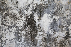 Old plastered surface white and gray Royalty Free Stock Photography