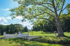 Old platanus tree in park with lake and bridge Royalty Free Stock Image