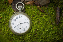 Old pocket watch in the forest. Royalty Free Stock Images