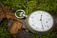 Old pocket watch in the forest. Stock Photography