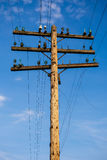 Old pole for telecommunication. Old wooden pole for telecommunication Royalty Free Stock Photos