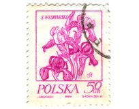Old polish stamp with orchid Royalty Free Stock Photos
