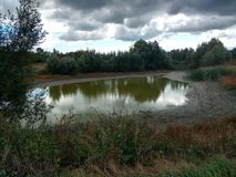 An old pond. Royalty Free Stock Image