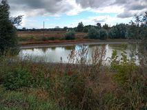 An old pond. Royalty Free Stock Images