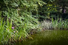 The old pond with dark green water under the big trees. Around its a lot of striped plants. royalty free stock images