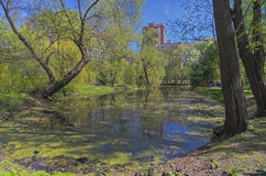 Old pond in early May. Stock Photography