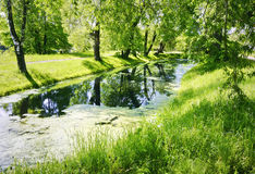 Old pond in the forest. With the sun shining (water vegetation Stock Photos