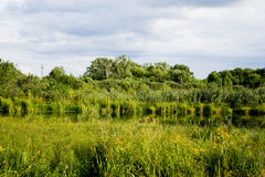 Old pond turned into swamps. Stock Photos