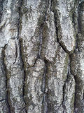 Old poplar bark texture macro detail Stock Photo