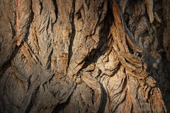 Old poplar textured bark Stock Photos