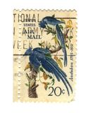 Old postage stamps from USA with two birds Royalty Free Stock Image