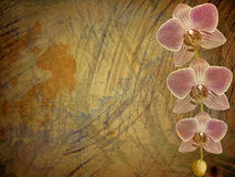 Old postcard for congratulation or invitation. With a branch of pink orchids Royalty Free Stock Image