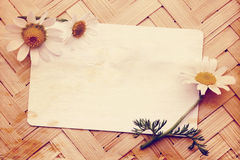 Old postcard with daisies Royalty Free Stock Photos