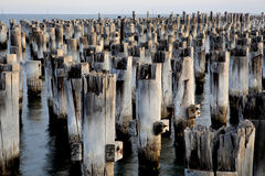 Old posts of a pier Stock Images