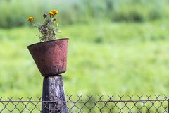 Old pot with flowers on a pole of chain link fence Royalty Free Stock Image