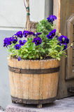 The old pot with flowers Stock Photography