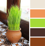 Old pot with grass on the table.  color palette swatches. Royalty Free Stock Image