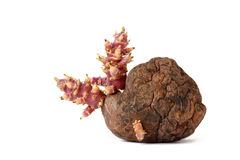 Old potato with sprouts  on white background. One old potato with sprouts  on white background Royalty Free Stock Images