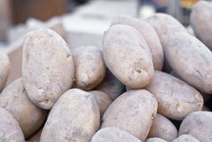 Old potatoes Royalty Free Stock Images