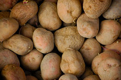 Old Potatoes close-up Stock Image