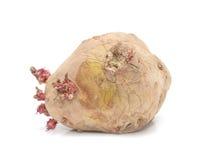 Old potatoes Stock Photos