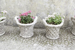 Old potted plants Stock Photography