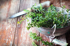 Bowl of fresh thyme Royalty Free Stock Photography