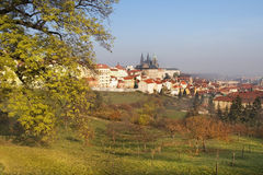 Old Prague from surrounding hills Royalty Free Stock Photography