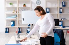 The old pregnant woman working in the office. Old pregnant woman working in the office stock images