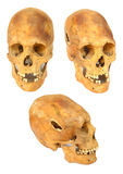 Old prehistoric human skull isolated. Over white Royalty Free Stock Images