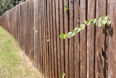 Old Privacy Fence Stock Image