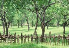 Old pruneyard Stock Photography